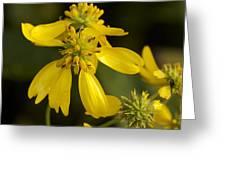 Yellow Wingstem Greeting Card