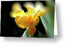 Yellow With Red Spots Greeting Card