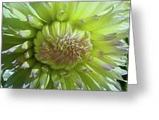 Yellow With White Dahlia Flower Greeting Card