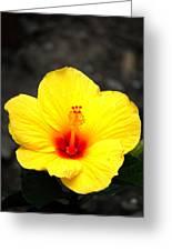 Yellow Wonder Greeting Card
