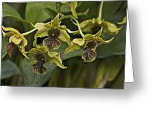 Yellowish Orchids Greeting Card