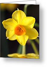 Yellows Of Jonquils Greeting Card