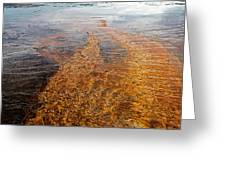 Yellowstone Colors #7 Greeting Card