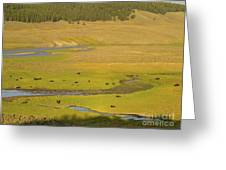Yellowstone Bison 2 Greeting Card