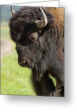 Yellowstone Bison Portrait Greeting Card