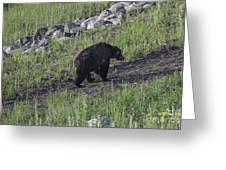 Yellowstone Black Bear Greeting Card