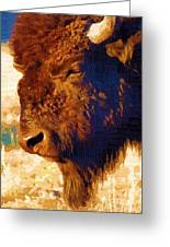 Yellowstone Buffalo Greeting Card