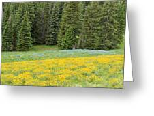 Yellowstone Meadow Greeting Card