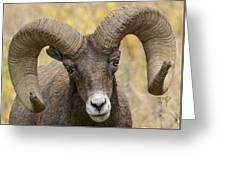 Yellowstone Ram Greeting Card