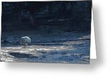 Yellowstone White Lady Unsigned Greeting Card
