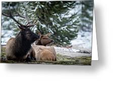 Yellowstone Wild Greeting Card