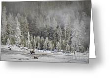 Yellowstone Winter Landscape Greeting Card