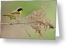 Yellowthroat Warbler Greeting Card