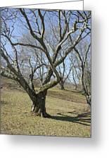 Yellowwood Tree In Winter Greeting Card