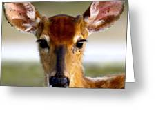 Yes Deer Greeting Card