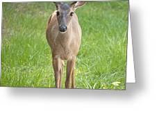 Yes Deer Greeting Card