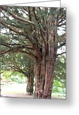 Yew Tree Entrance Greeting Card