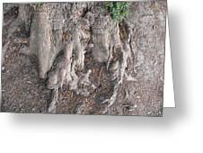 Yew Tree Roots Greeting Card