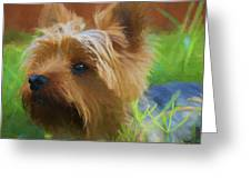 Yorkie In The Grass - Painting Greeting Card