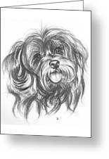 Yorkiepoo Greeting Card