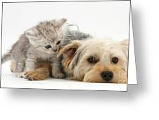 Yorkshire Terrier And Tabby Kitten Greeting Card