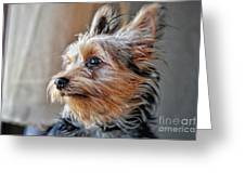 Yorkshire Terrier Dog Pose #2 Greeting Card