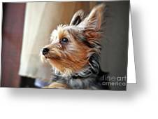 Yorkshire Terrier Dog Pose #5 Greeting Card