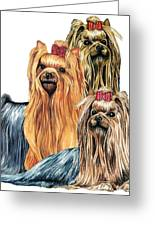 Yorkshire Terriers Greeting Card