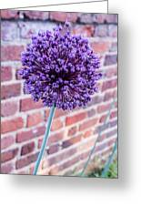 Yorktown Onion Bloom Greeting Card