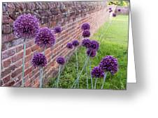 Yorktown Onions Along The Wall Greeting Card