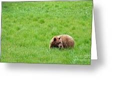 Yosemite Bear Greeting Card