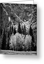 Yosemite Meadow In Black And White Greeting Card