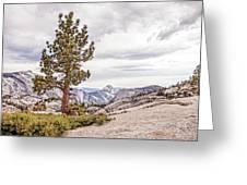 Yosemite Tree Greeting Card