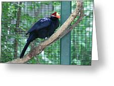 You Are My Audience - Bird Perched Greeting Card