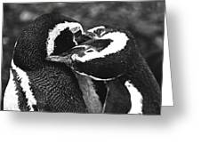 You Scratch My Back... Greeting Card