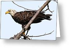Young Adult Eagle Greeting Card
