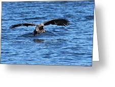 Young Bald Eagle I Greeting Card