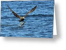 Young Bald Eagle II Greeting Card