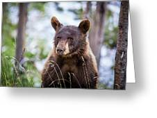 Young Black Bear Greeting Card