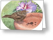 Young Blackbird After Raisins Greeting Card