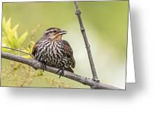 Young Blackbird Greeting Card