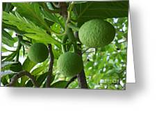 Young Breadfruit Greeting Card