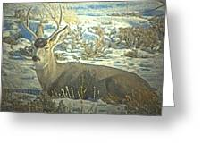 Young Buck Resting Greeting Card