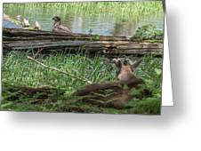 Young Buck Watching Eagle Greeting Card