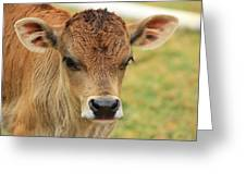 Young Calf In A Pasture Greeting Card