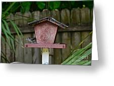 Young Cardinal Greeting Card