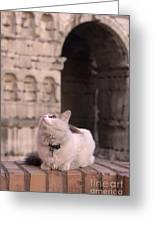 Young Cat Old Monument Greeting Card