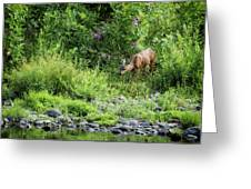 Young Doe Among The Flora, No. 2 Greeting Card