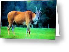 Young Eland Bull Greeting Card