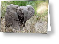 Young Elephant In The Light, Africa Wildlife Greeting Card